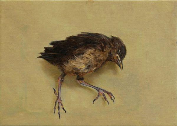Dead blackbird, Oil, 35 x 25 cm